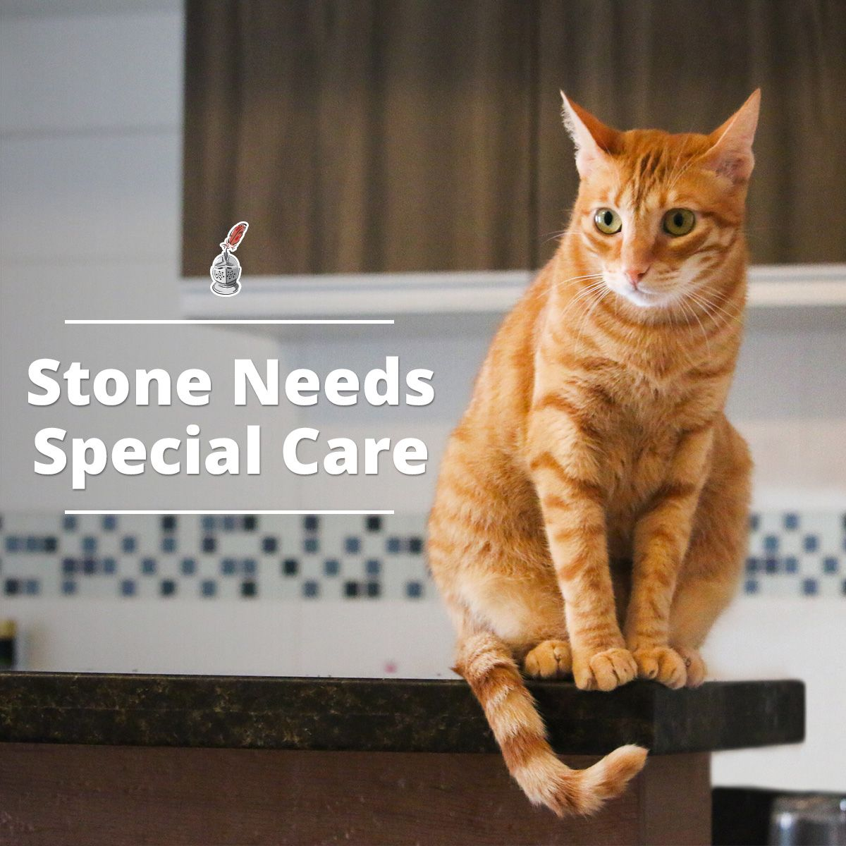 Stone Needs Special Care